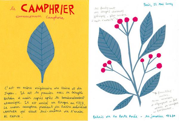 Un herbier créé par Arianna Tamburini.
