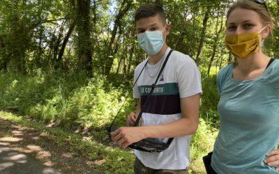 Haies et arbres remarquables : un inventaire réalisé à travers la commune